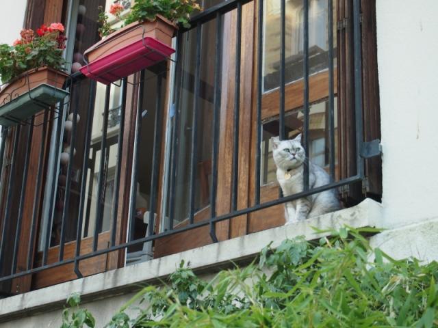 散步巴黎遇見窗台的銀灰貓