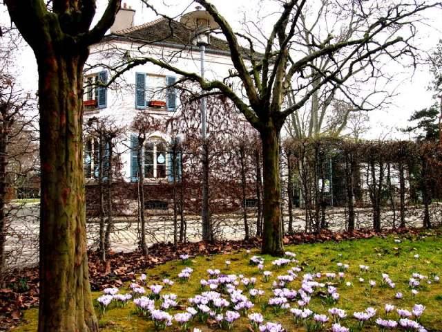 博希公園的員丁之家地上的紫花已經綻放了